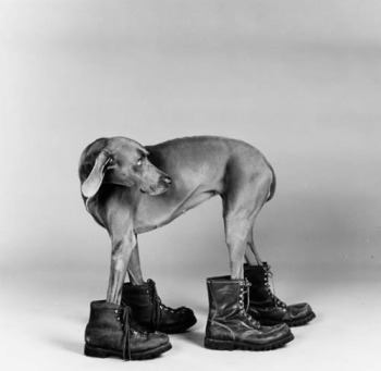 dogs William Wegman WW02