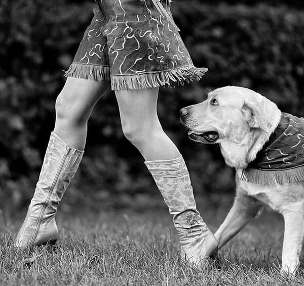 Φωτογραφία: DOGS