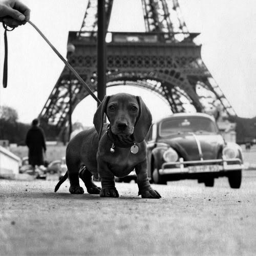 dogs Hans MauliHM01