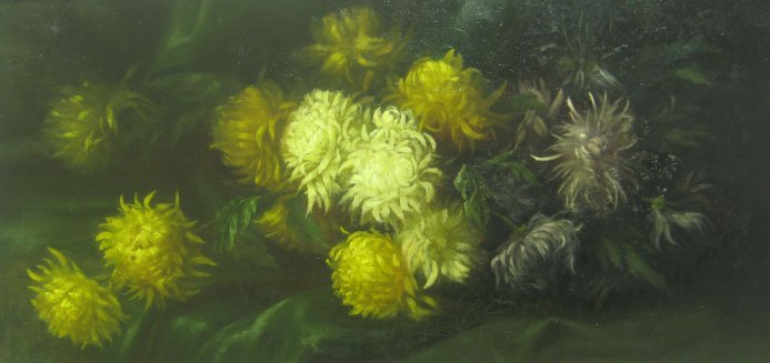 Chrysanthemus